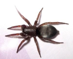 mouse spider 23 le300509 1280 copy