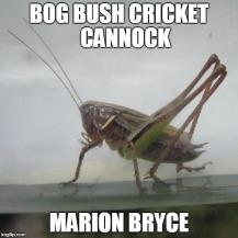 bush cricket meme