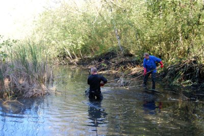 Forbes Hole reedmace removal
