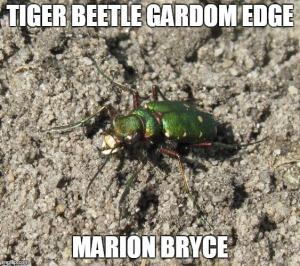 tiger meme