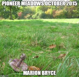 meadow meme (2)