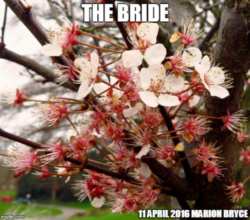 bride meme