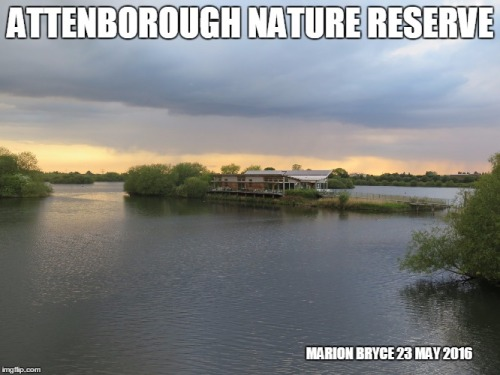 attenborough meme