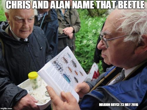 name beetle meme