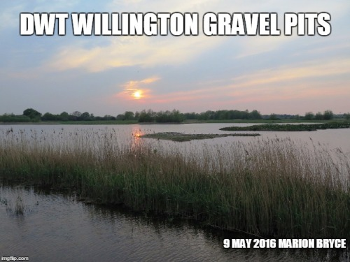 willington meme.jpg