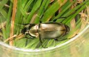 beetle elvaston 300915 IMG_0649