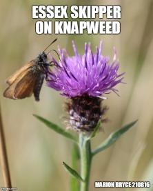 knap mem
