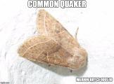 quaker meme