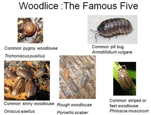 Capturefamous five