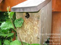 Birdbox with Tree Bumblebee colony